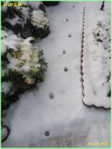 tntnH24-12-29ネコの足跡 (1)_1