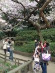 桜 in 新宿御苑5_120407
