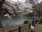 桜 in 新宿御苑4_120407