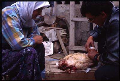 イスパルタ夫婦と鶏1
