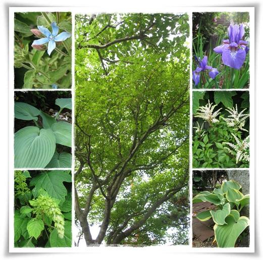 2013-5-16の庭