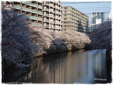 0323桜①
