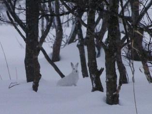 ウサギを探して1 (8)