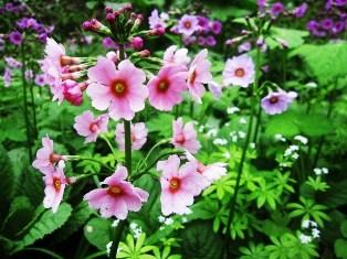 1月24日 嗚呼、美しきあの花々は (4)