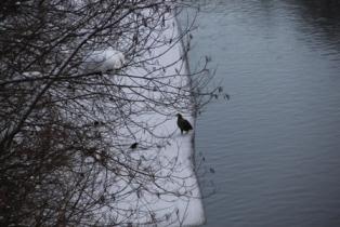 頓別川でカモ探し (2)