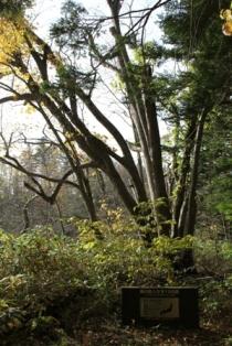 秋の紅葉登山 (2)