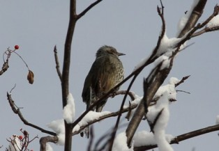 11月16日鍾乳洞冬の野鳥 (5)