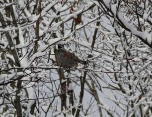 11月16日鍾乳洞冬の野鳥 (4)