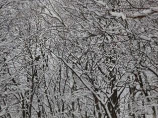 11月16日鍾乳洞冬の野鳥 (3)
