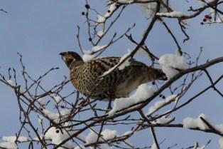 11月16日鍾乳洞冬の野鳥 (2)