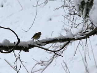11月16日鍾乳洞冬の野鳥 (8)