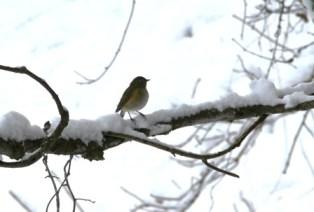 11月16日鍾乳洞冬の野鳥 (7)