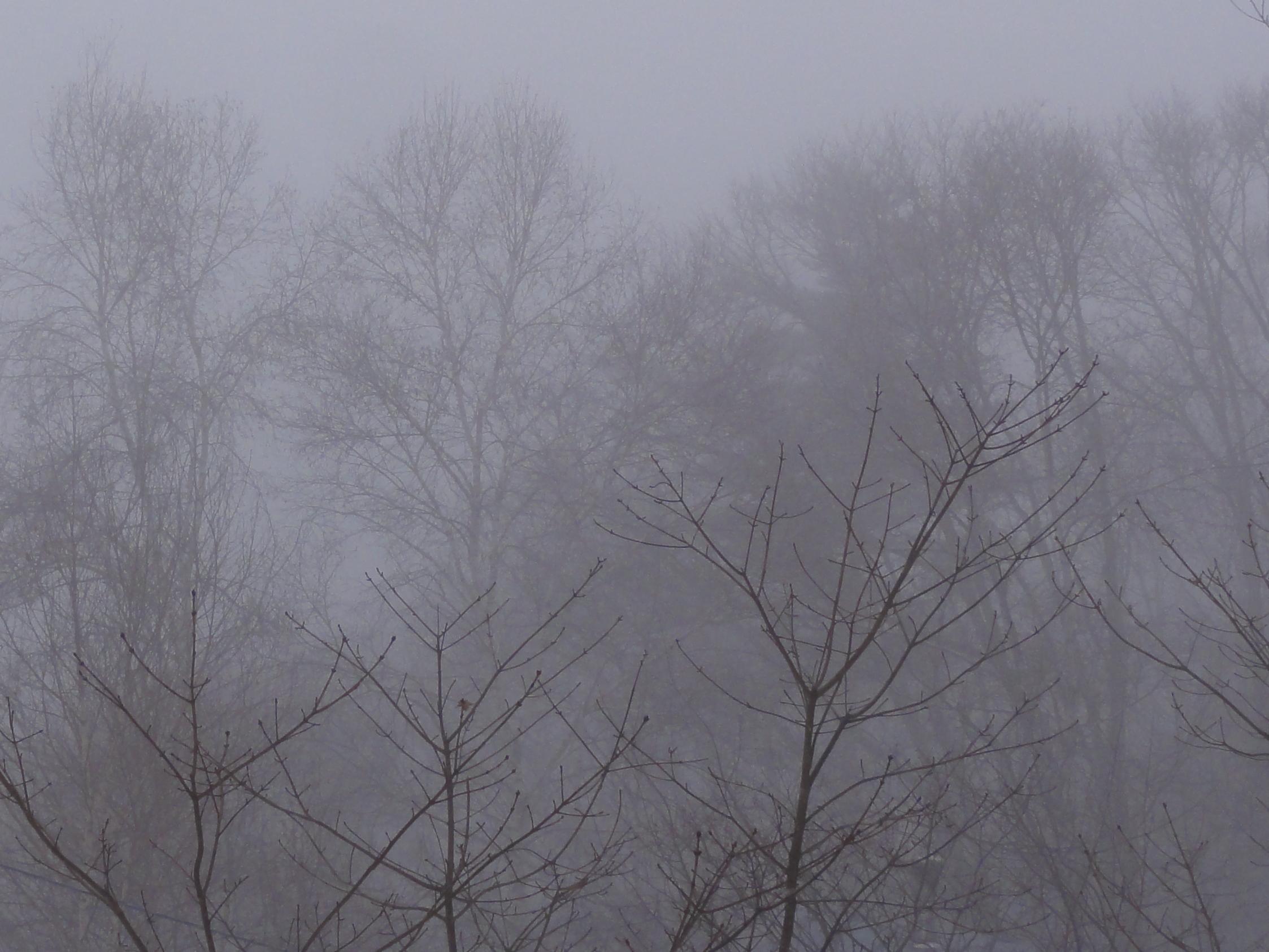 今朝は寒いぞ1