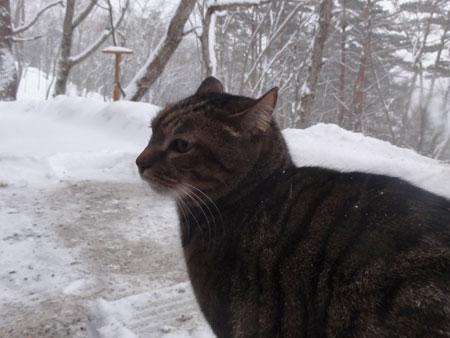 今日は大雪1