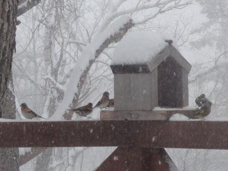 今日は大雪4