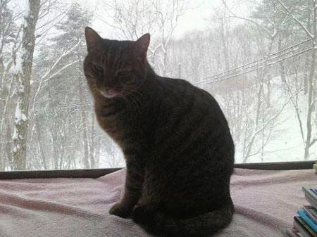 今日は大雪5