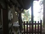 愛宕山・白髭神社11