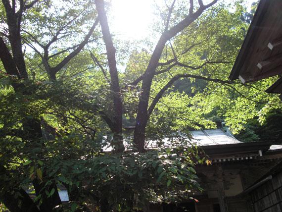 愛宕山下山と月輪寺18
