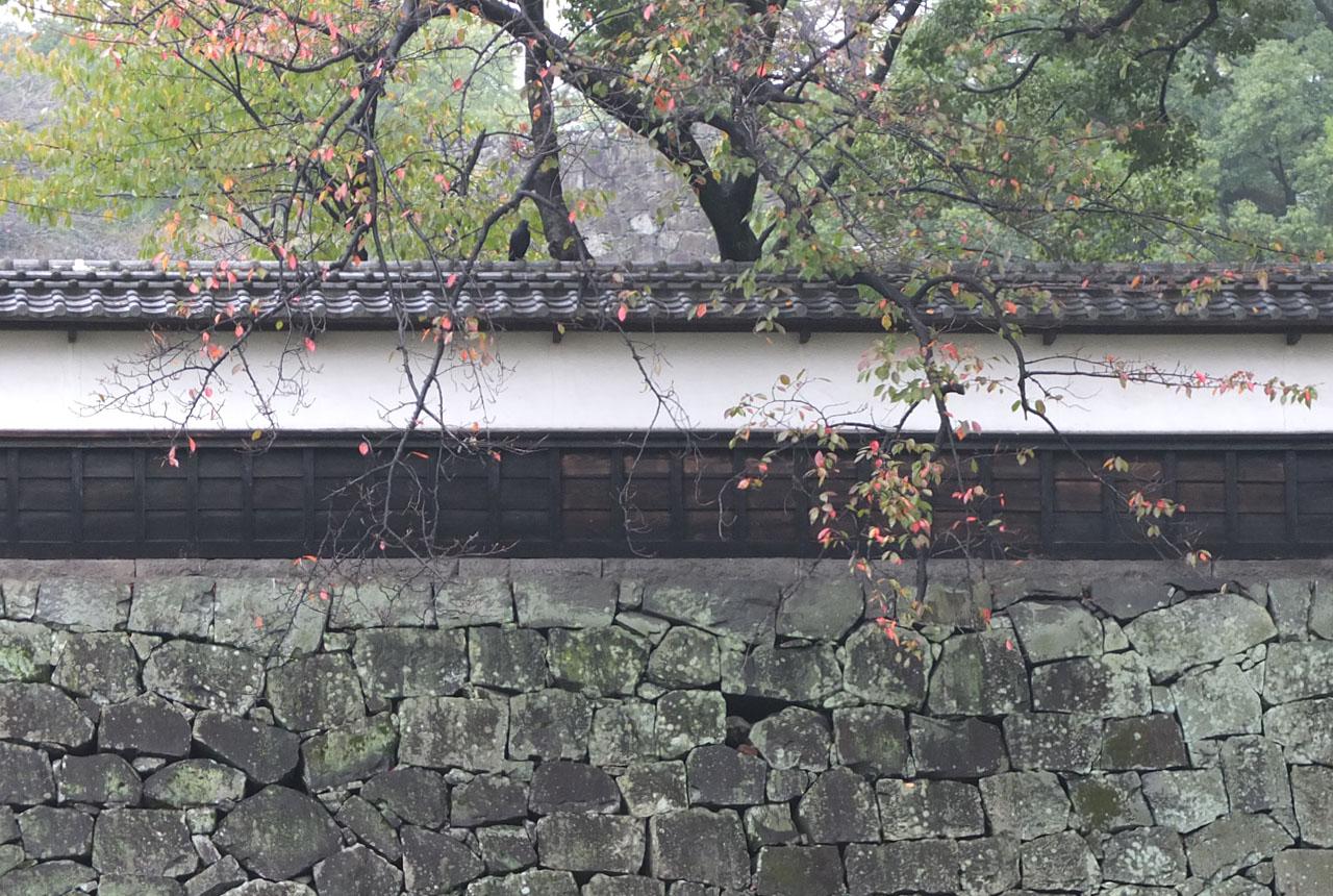 0394 坪井川から 1280×860