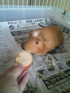 19 リンゴ食べ始め