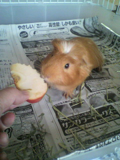 19 リンゴをシャクシャク
