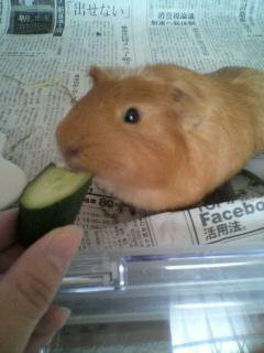 胡瓜の一口