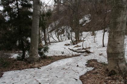 雪国植物園