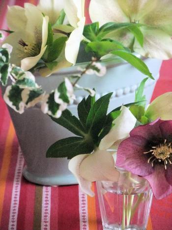 クリスマスローズ 花瓶(350)