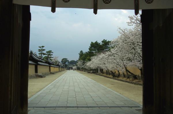 斑鳩 法隆寺 参道並木