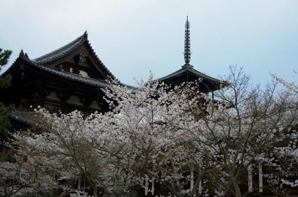 斑鳩 法隆寺 金堂と塔