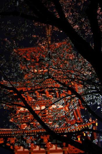 薬師寺 桜と塔