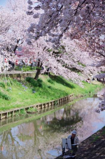 佐保川 桜並木2