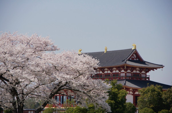 平城京 大極殿と桜