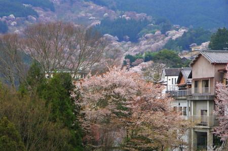 吉野山 上千本方面