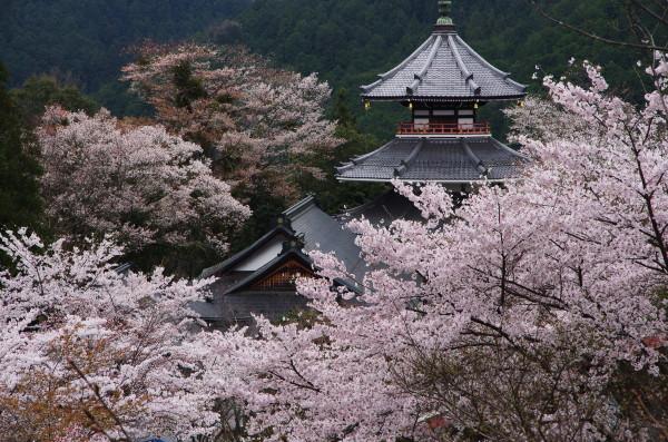 吉野山 金峯山寺1