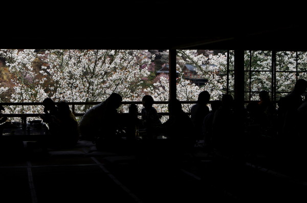 吉野山 花見