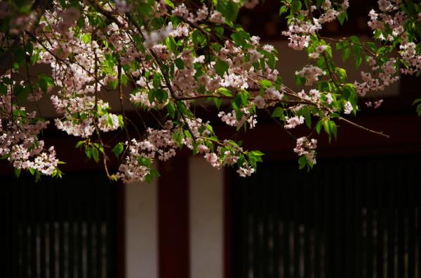 東大寺回廊 枝垂れ