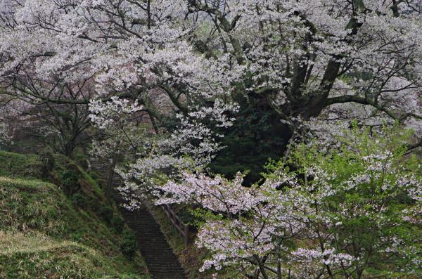 仏隆寺 石段