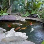 スワンパック 鯉