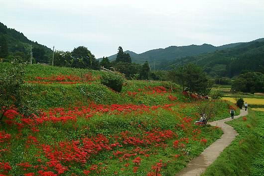 minosawa1.jpg