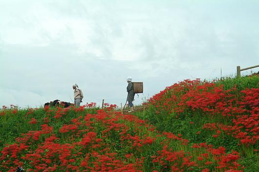 minosawa5.jpg