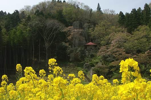 nasusakura2.jpg