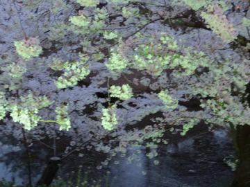 上田公園4