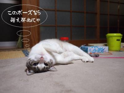 春の猫達04
