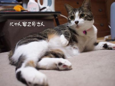春の猫達05