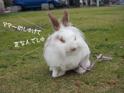 兎犬猫02