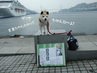 兎犬猫03