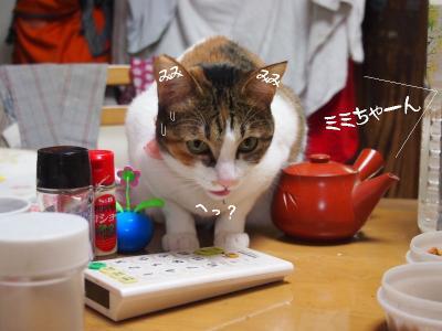 兎犬猫04