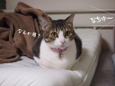 兎犬猫05
