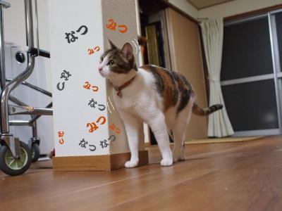 うちなー猫01